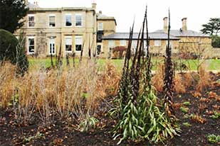 Winter gardening Bowcliffe