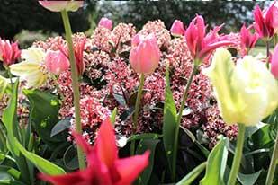 Spring-garden-tour-header