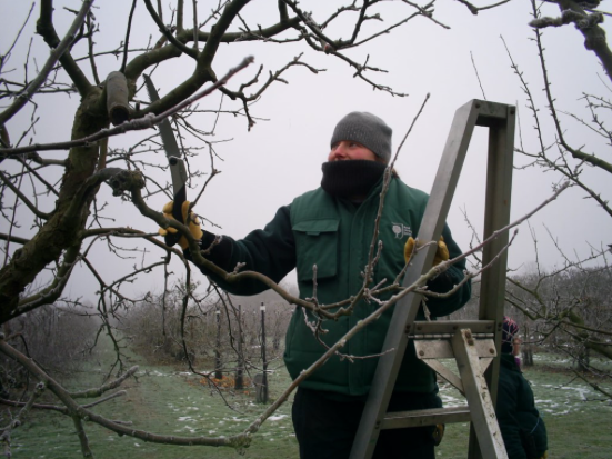 Wisley winter 2010. Although this may look like a cold job, it's one that I find most rewarding!
